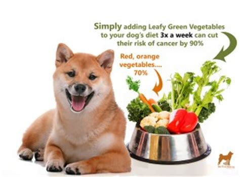 loud stomach noises won t eat best food for shiba inus my shiba inu