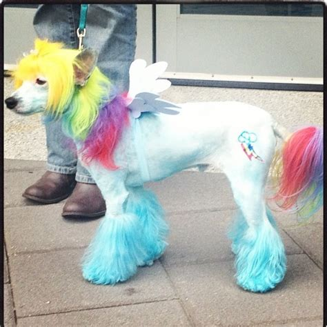 rainbow dogs top 10 inventive costumes fuzzy today