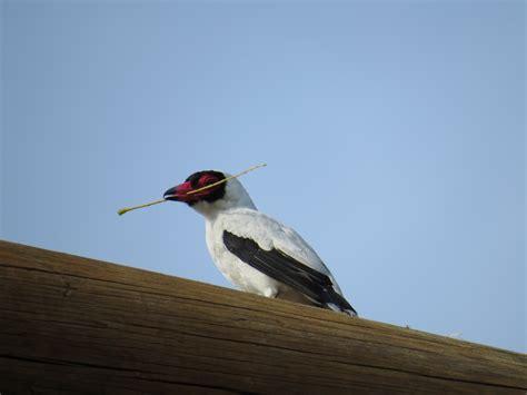 imágenes de sudamérica aves de costa rica im 225 genes taringa