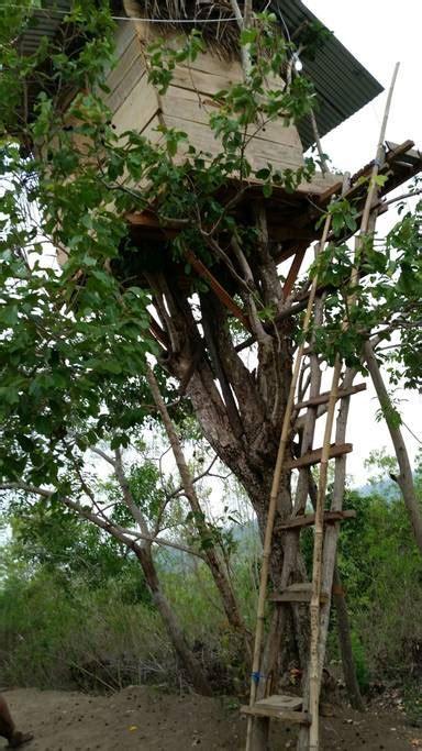 airbnb nusa penida maison d arbre de nusa penida cabanes dans les arbres 224