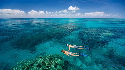 The Great green island great barrier reef tour great adventures