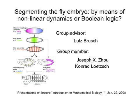 pattern formation pattern formation drosophila