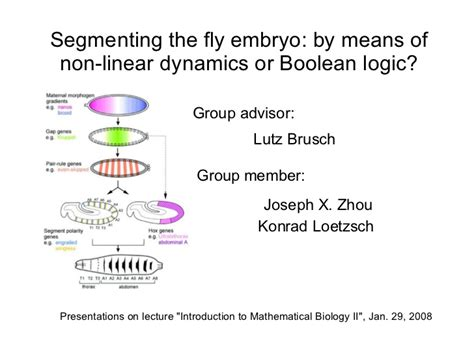 pattern formation ppt pattern formation drosophila