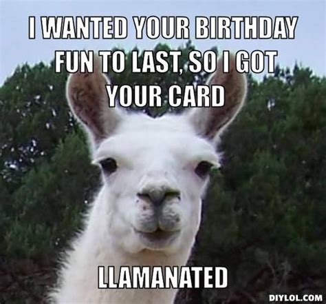 happy birthday funny llama google search llama