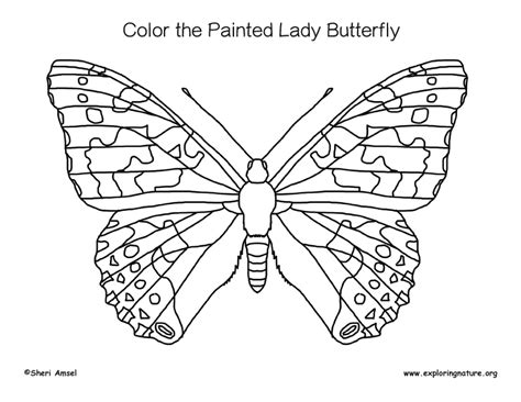 Coloring Page Of Painted Lady Butterfly | butterfly painted lady coloring