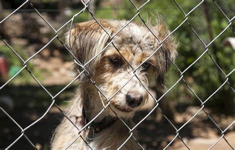 Hunde aus ausländischen Tierheimen nach Deutschland holen