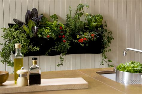 Indoor herb garden wall indoor herb garden wall