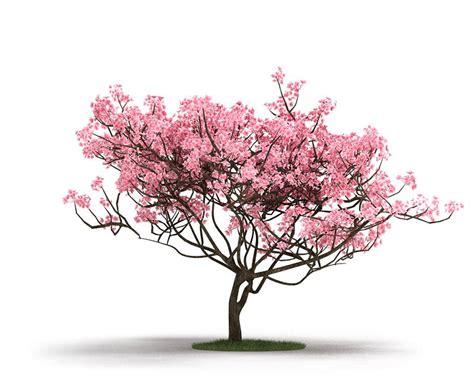 cherry blossom tree 3d model free pink tree on grass 3d model obj cgtrader