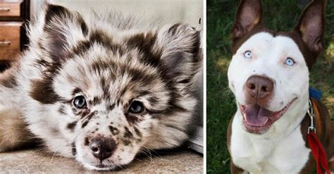 crossbreed dogs 20 crossbreed dogs that will make you fall in with mutts bored panda linkis