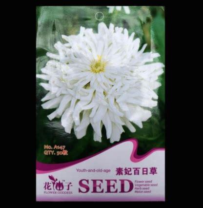 Benih Biji Bunga Zinnia Putih benih zinnia white medusa 50 biji retail asia bibitbunga