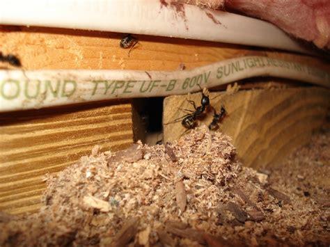 find  carpenter ant nest exterminatorhamiltonca