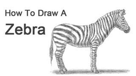 Zebra Whos The Door by How To Play Zebra Mp3 Fast Free Mp3to Space
