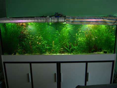 beleuchtung aquarium wie lange led beleuchtung aquarium www ledhilfe de led forum