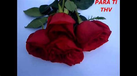 imagenes tiernas rojas rosas rojas para ti youtube