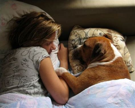 sleeping with dogs what sleeping dogs feel you