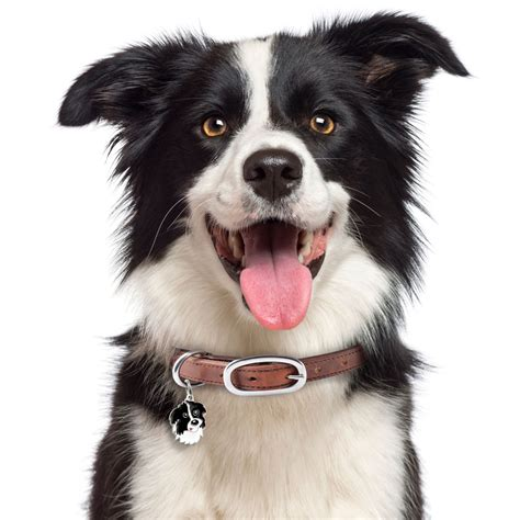 images of border collie puppies border collie tag id alldogtags