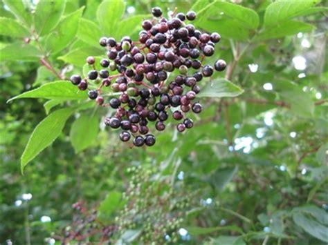 shade tolerant fruit trees drought tolerant flowering shrugs zone 5