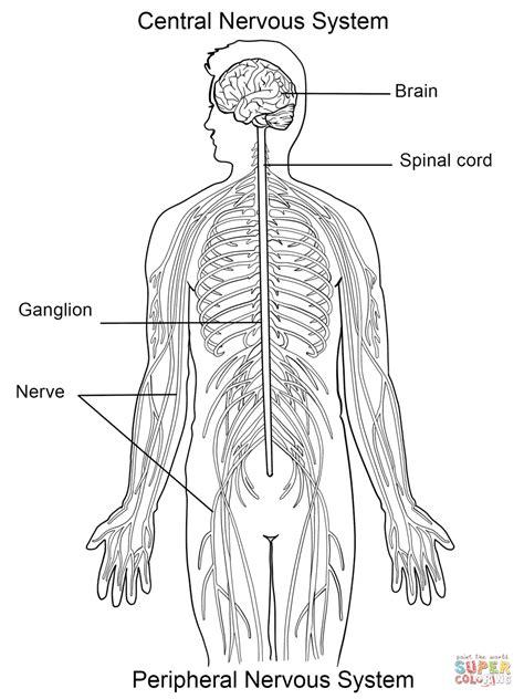 Primary Explorers Human the nervous system lesson 0398 tqa explorer