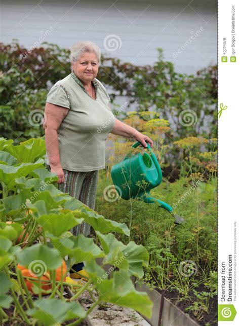 Vegetable Garden Stock Photo   Image: 40034078