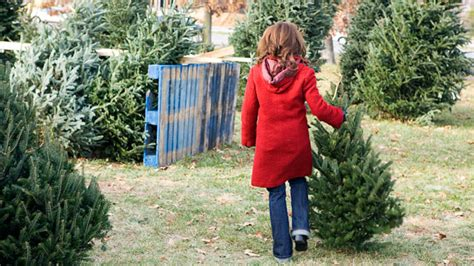 what you should know when buying a christmas tree abc news