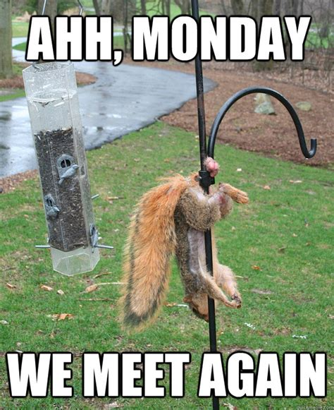 Happy Monday Meme - ahh monday we meet again misc quickmeme
