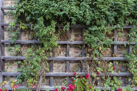 Garten Blumen Jetzt Pflanzen by Kletterger 252 St Und Spalier Jetzt Kontrollieren Garten