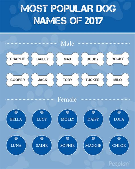 popular puppy names most popular names of 2017 petplan