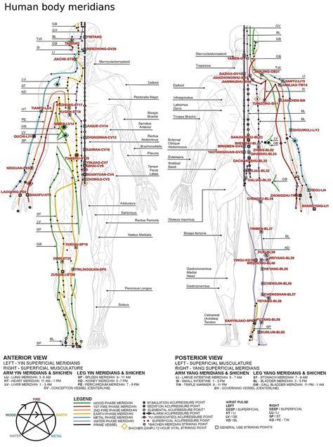 medicine meridians diagram meridian medicine