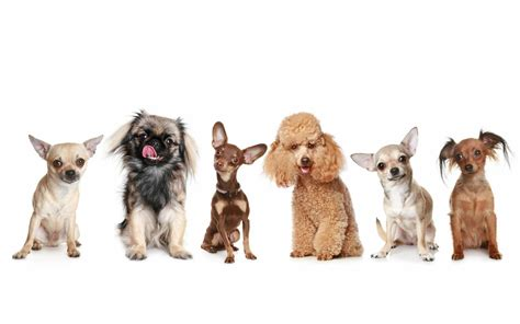 different dogs dogs dogs wallpaper