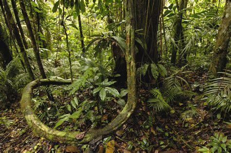 amazon rainforest view world beauty