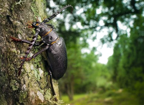 bug treer trees insects beetles walldevil