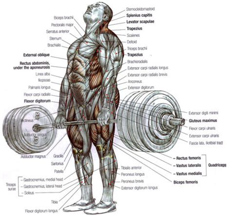 Does Decline Bench Press Work Holds Record Deadlift