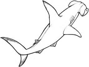 Cartoon Hammerhead Shark  Clipartsco sketch template