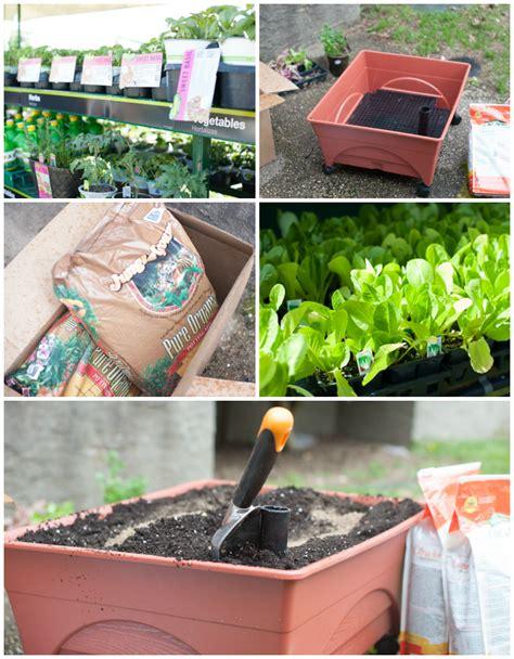 digin  grow  salad garden  home