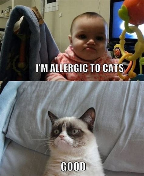 Angry Cat Good Meme - ultimate grumpy cat compilation 17 pics