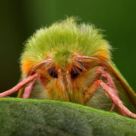 Amazing Beetles amazing pixels amazing insects