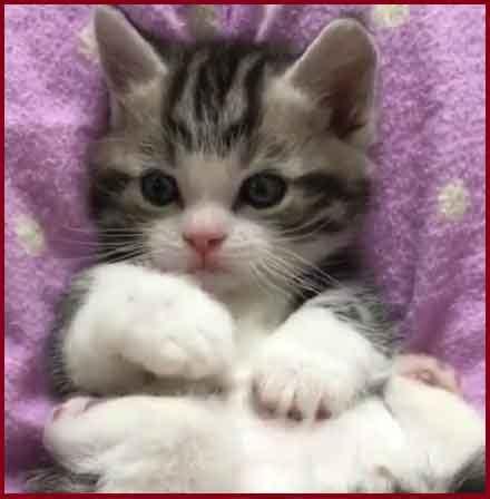 imagenes gatitos hermosos hermosas imagenes de gatitos adorables