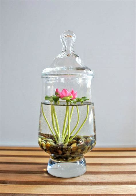 reserved tiny pink lotus water terrarium in glass