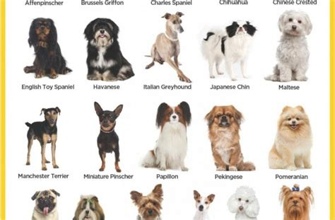 small puppy names small dogs 20 pounds list breeds picture