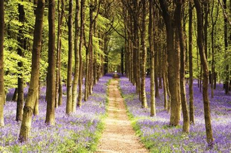 Cheapest Wall Murals woodland path luscious spring landscape poster buy online