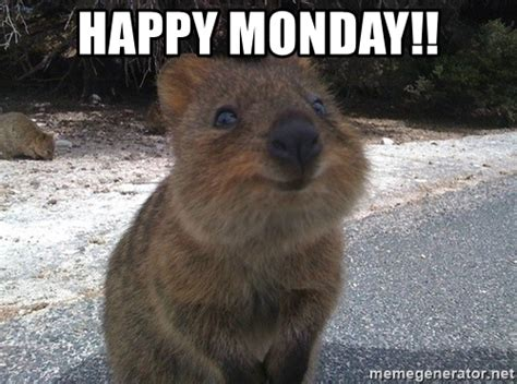 Happy Monday Memes - happy monday meme memes