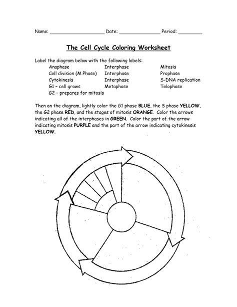 the cell cycle coloring worksheet cell cycle worksheet worksheets for all and