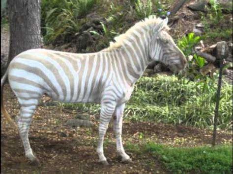 imagenes de animales raros del mundo los animales mas raros y feos youtube