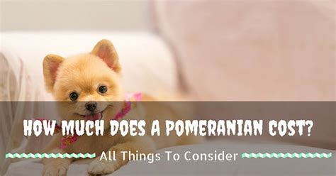 how much do pomeranian cost knowledge archives pup how