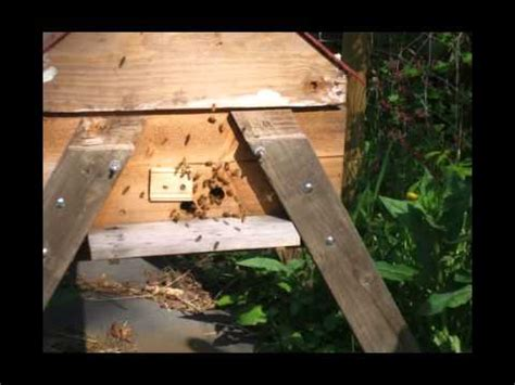 top bar hive overwinter success story 7 vancouver bc