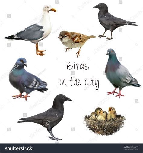 Birds Live On by Birds That Live With Us In The City Pigeons Sparrow