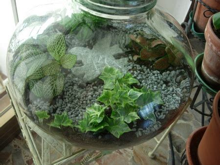 giardini in bottiglia giardino in bottiglia di cosa si tratta pollicegreen