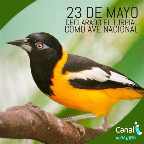 turpial ave nacional venezuela apexwallpapers com canal i on twitter quot el turpial ave nacional de venezuela