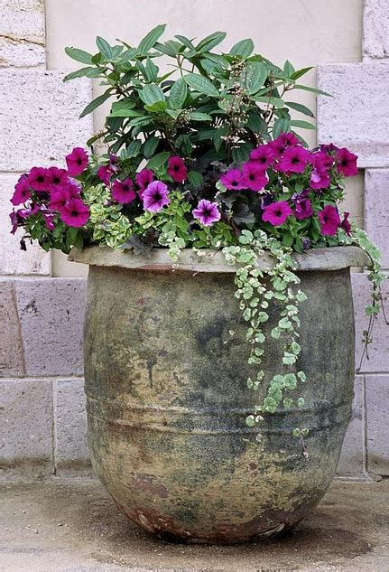 Flower Ideas For Planters by Planter Ideas For Your Garden Patio Global Garden