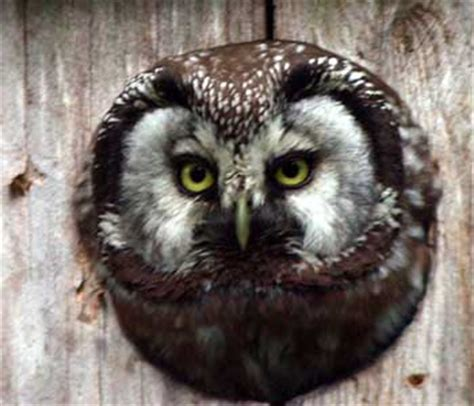how to attract owls to your backyard or garden